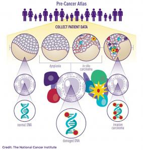 Infographic of the Pre-Cancer Atlas
