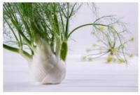 A fennel plant