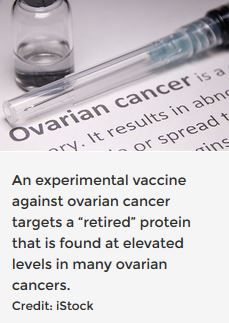 "An experimental vaccine against ovarian cancer targets a ""retired"" protein that is found at elevated levels in many ovarian cancers."