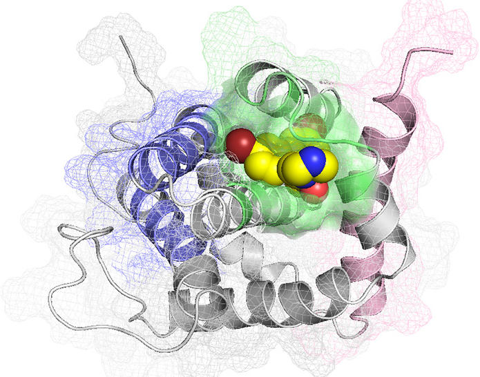 An illustration displaying the experimental drug BAI1 (yellow) which inhibits the BAX protein using a novel binding site (green) and prevents the death of heart cells.