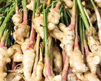 A bunch of ginger root.